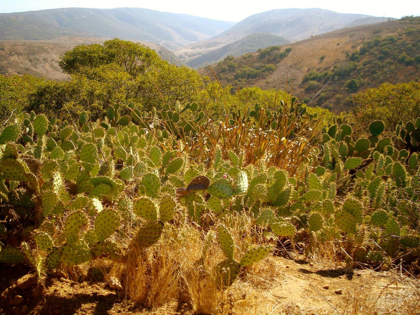 Mini cactus field.